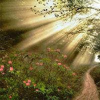 Una luz que alumbra nuestros pasos