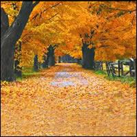 El caer de las hojas nos recuerda la muerte